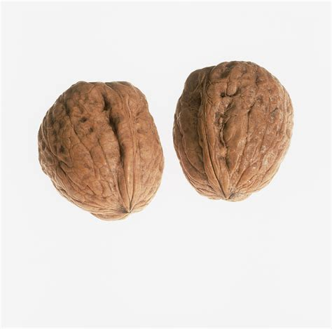Pair Of Pair Of Walnuts Photograph By Kevin Curtis