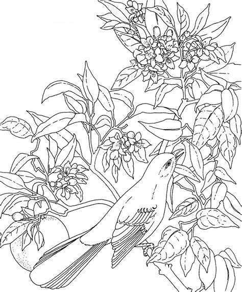 coloring page of florida state bird a photo of florida state flower