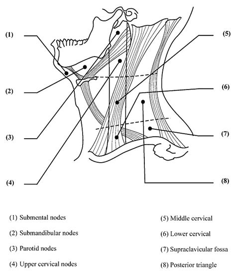 diagram of lymph nodes in neck lymph nodes neck location diagram best free home