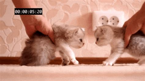 download gambar format gif lucu animasi hewan gif lucu koleksi gambar hewan lucu dan unik