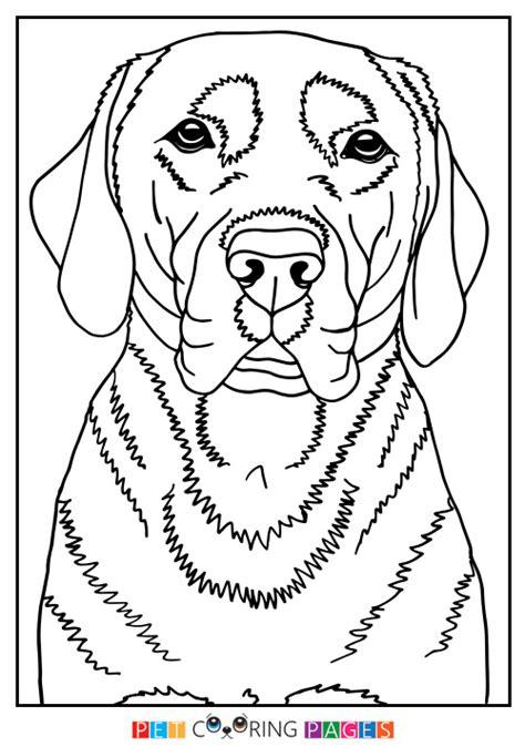 labrador coloring pages labrador retriever coloring page quot finja quot zileart