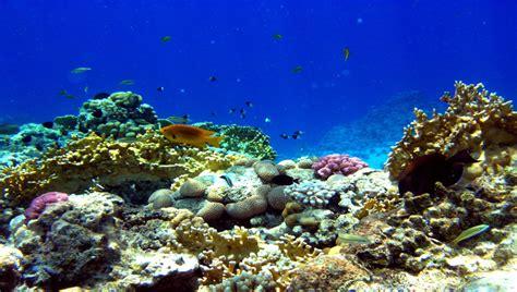 Underwater Garden by Underwater Garden Afro Tourism