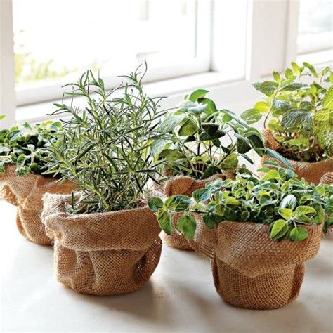 herb plant centerpieces with gentle burlap wrapping event