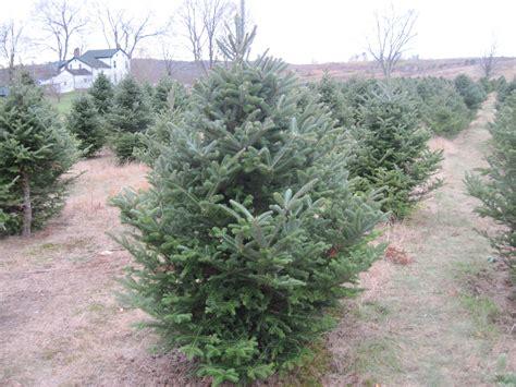 real christmas trees rule ridinkulous