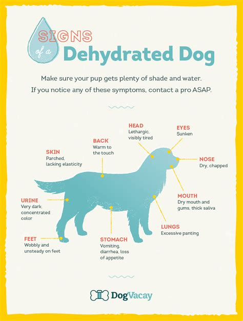 symptoms of dehydration in dogs how to recognize and prevent dehydration in dogs