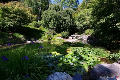 Of California Botanical Garden by Of California Botanical Garden