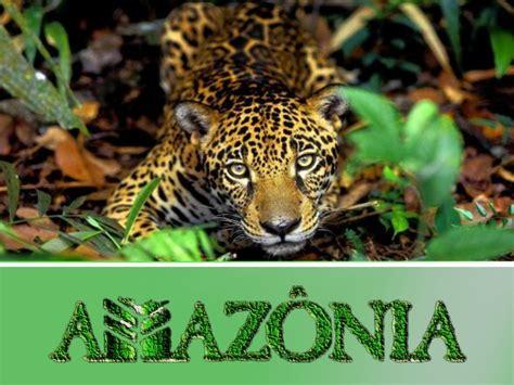 alguns graficos de animais ecologia bioma amaz 244 nia
