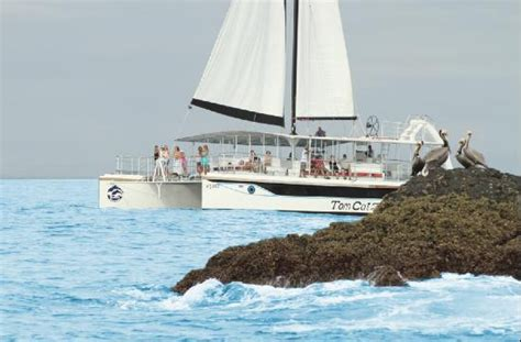catamaran adventures quepos catamaran quepos tour transportation from jaco included