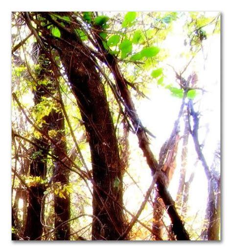 lights woodland woodland light
