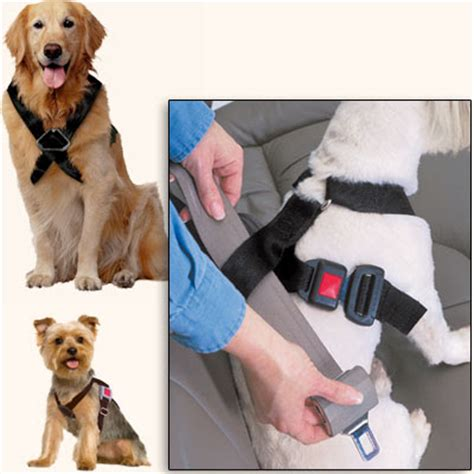 is it illegal to bury a dog in your backyard dog booster seat ireland 100 top 15 best car seats for