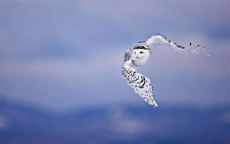 witte achtergrond met 3d pingun met zonnebril en een ijsje achtergrond met vliegende witte uil mooie leuke