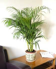 names of indoor plants related keywords amp suggestions