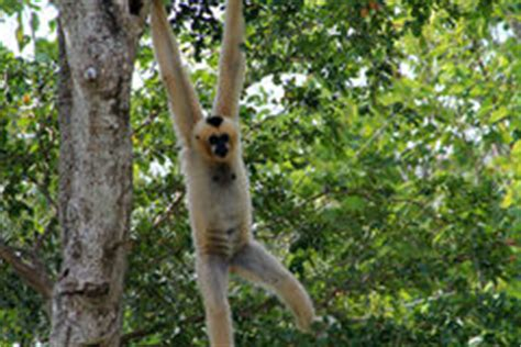 monkey swinging from tree bww blog intolerance in the art world today