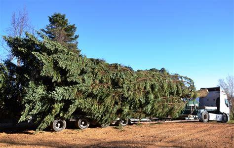 ufficio collocamento adrano agrigento un albero di natale in arrivo da monte