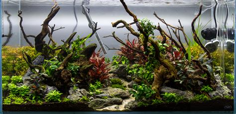 aquascape substrate from this to this aquascape progression scape 4 added