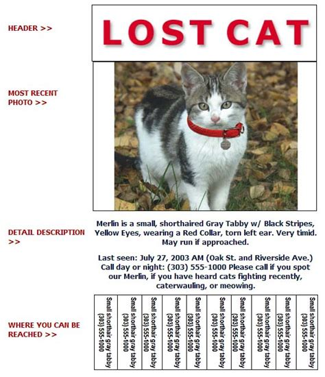 Lost Cat Poster Template lost cat poster template gallery