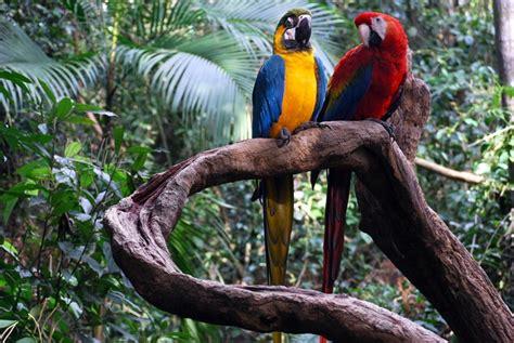 jungle animals rainforest galahotels