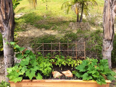 edible gardens photo gallery tecas edible gardens