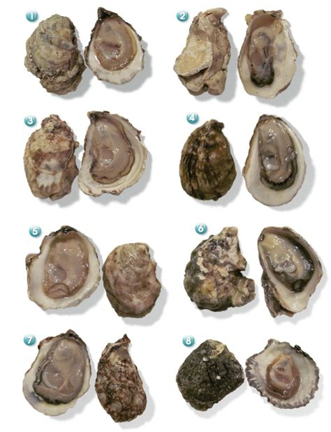 all you need to know about oysters valentine s day epicurious com epicurious com