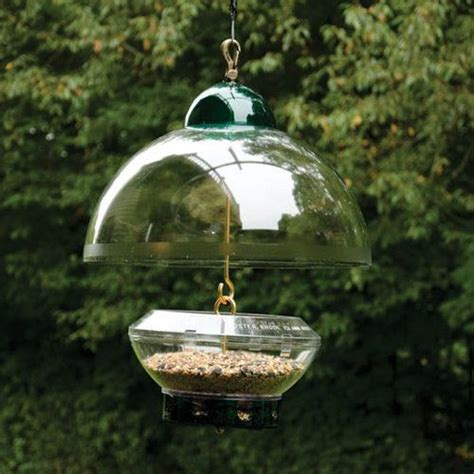 5 ways to squirrel proof a bird feeder feedingnature com