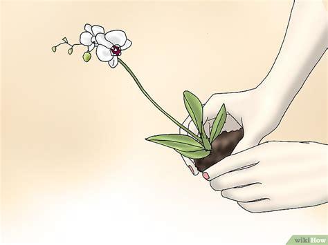 come si bagnano le orchidee 6 modi per prendersi cura delle orchidee wikihow