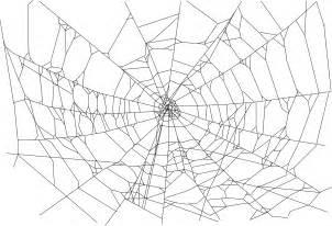photography spider wallpapers desktop phone tablet awesome desktop awesome wallpapers