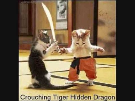 1452138923 how to be a cat ninja cats youtube