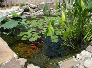 backyard pond plants goldfish ponds water gardens the pond doctor