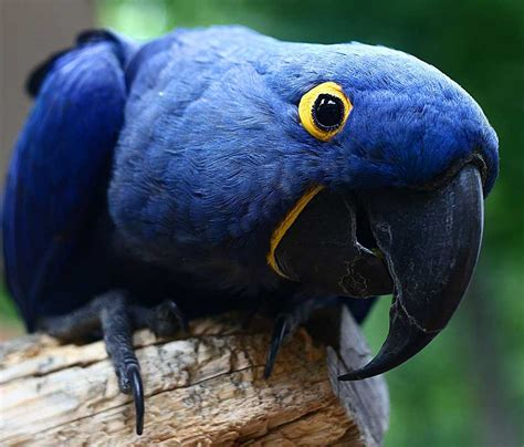 list of 20 most expensive birds most expensive birds in the world top ten list
