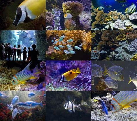 Nsane Giveaway - monaco aquarium epix calendar 6 1 0 giveaway giveaways nsane forums