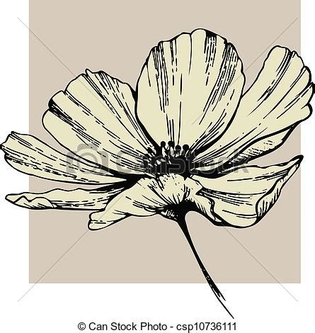 cosmos flower vector clip art search illustration