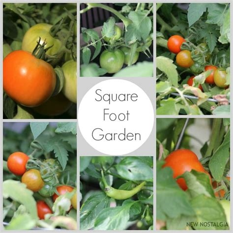 Square Foot Gardening Tomatoes by Square Foot Garden Progress What To Do With All Those