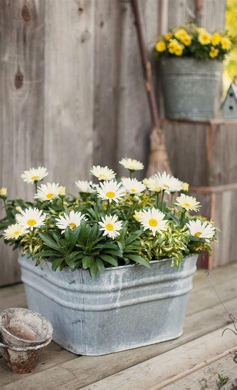 foto fiori primaverili fiori primaverili e pasquali