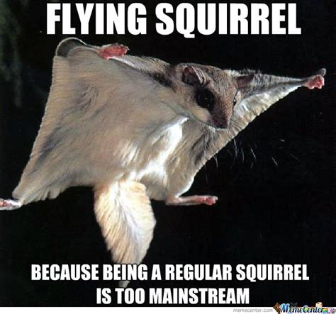 Funniest Memes Pictures - 31 most funniest squirrel meme pictures and photos