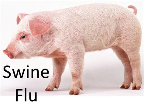swing flu swine flu 2009