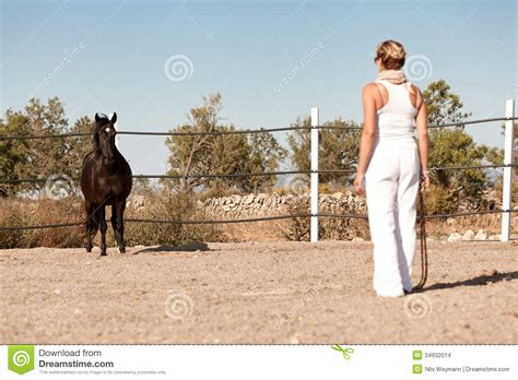 horse outside young woman training horse outside in summer stock photo