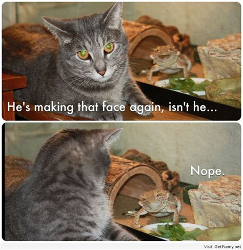cat pictures captions cat pictures with captions i am bored