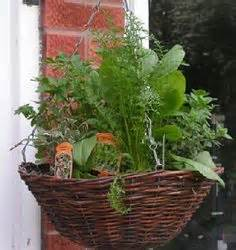 Smith And Hawken Window Box - container garden 2015 on pinterest hanging baskets rainbow chard and herbs
