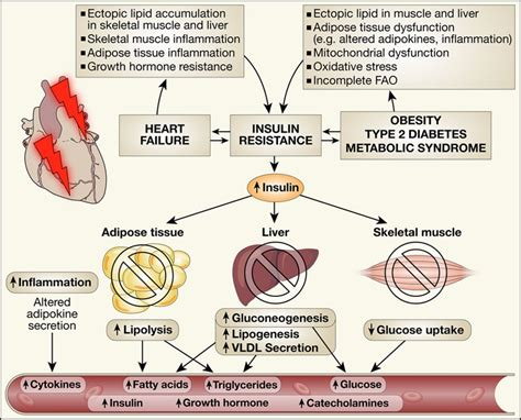 hearts of resistance insulin signaling and failure circulation research