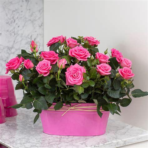 roses that last forever forever roses 28 images the forever theforeverrose