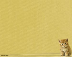 Little Cat Powerpoint Design Bestppts Cat Powerpoint Template