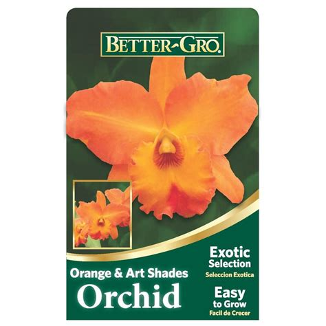 bett gro better gro 4 in orange cattleya packaged orchid 20323