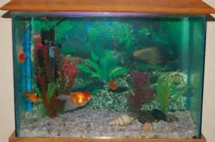 fish tank 10 gallon fish tank 50 gallon fish tank