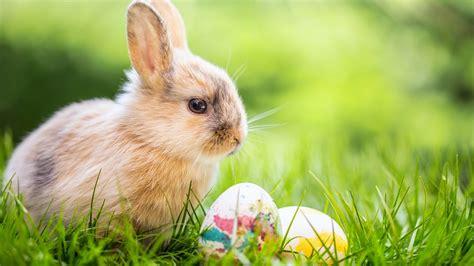Wann Ist Eigentlich Ostern Ndr De Nachrichten