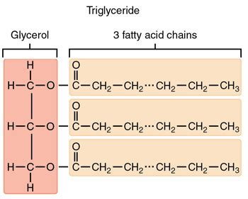triacylglycerol structure function video lesson