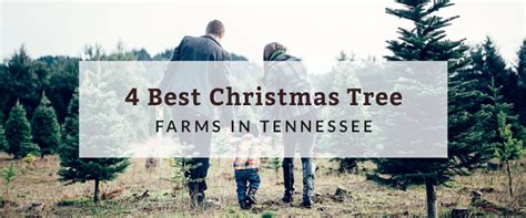 4 best christmas tree farms in tennessee hurdle land and
