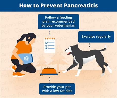 what causes pancreatitis in dogs pancreatitis in dogs symptoms causes more canna pet