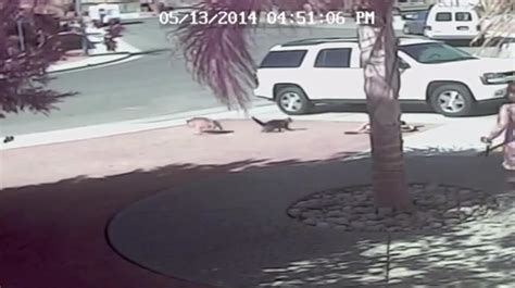 cat saves boy from cat saves california boy from attack nbc news