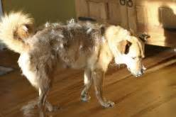 top 10 non shedding dogs