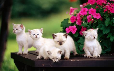 baby cats and dogs baby cats wallpaper